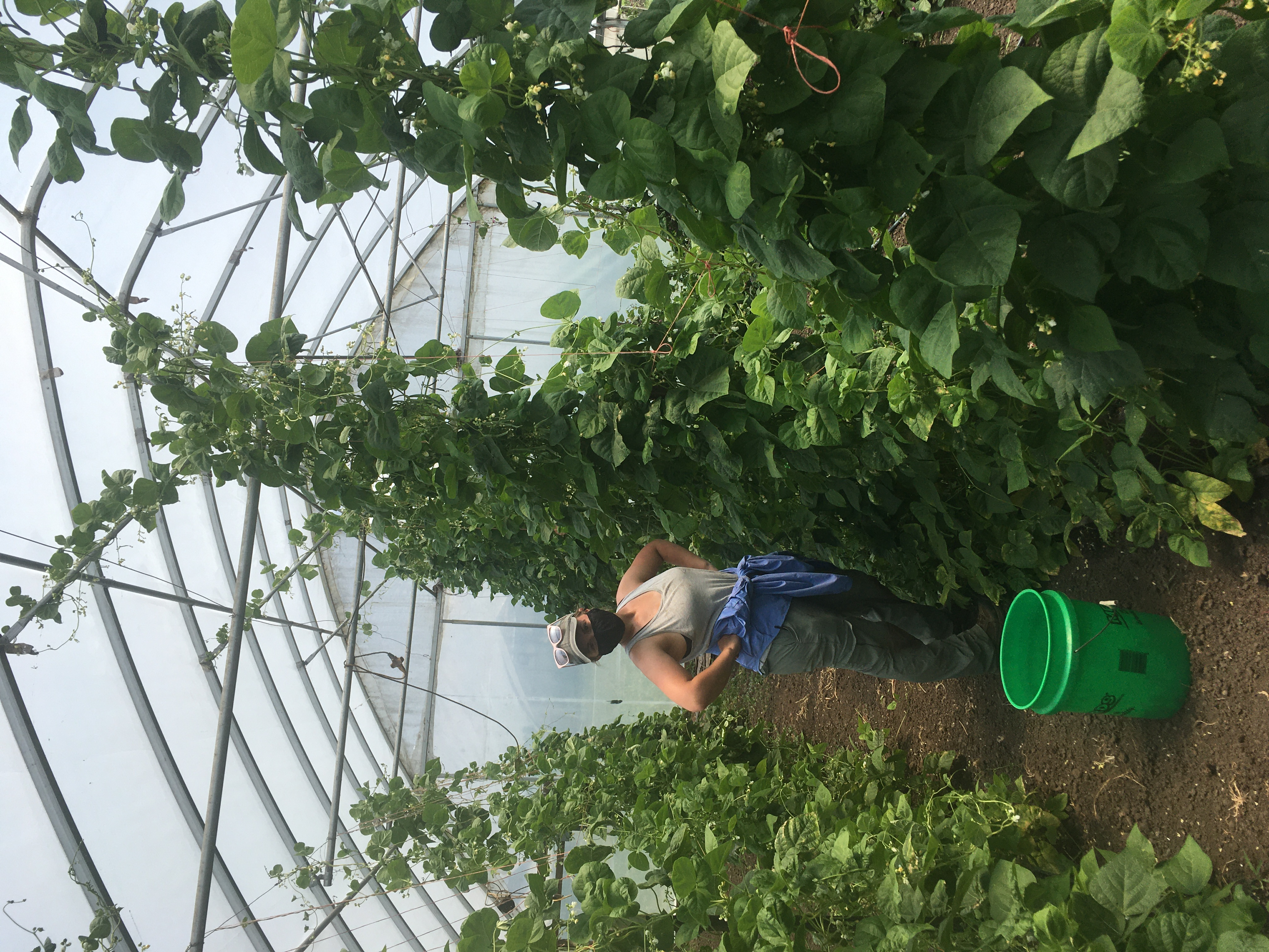 Farm Happenings for June 24, 2020: Hints of Summer