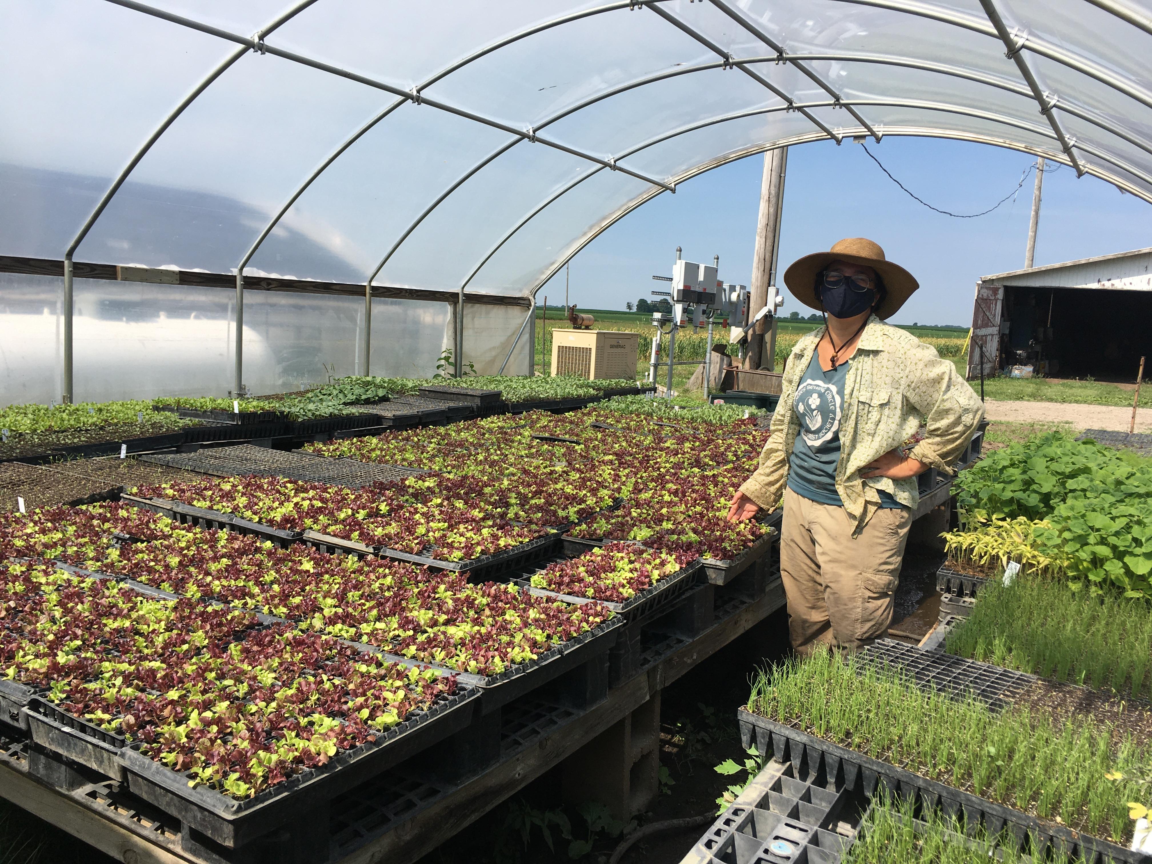 Farm Happenings July 1st: Sea of Salad