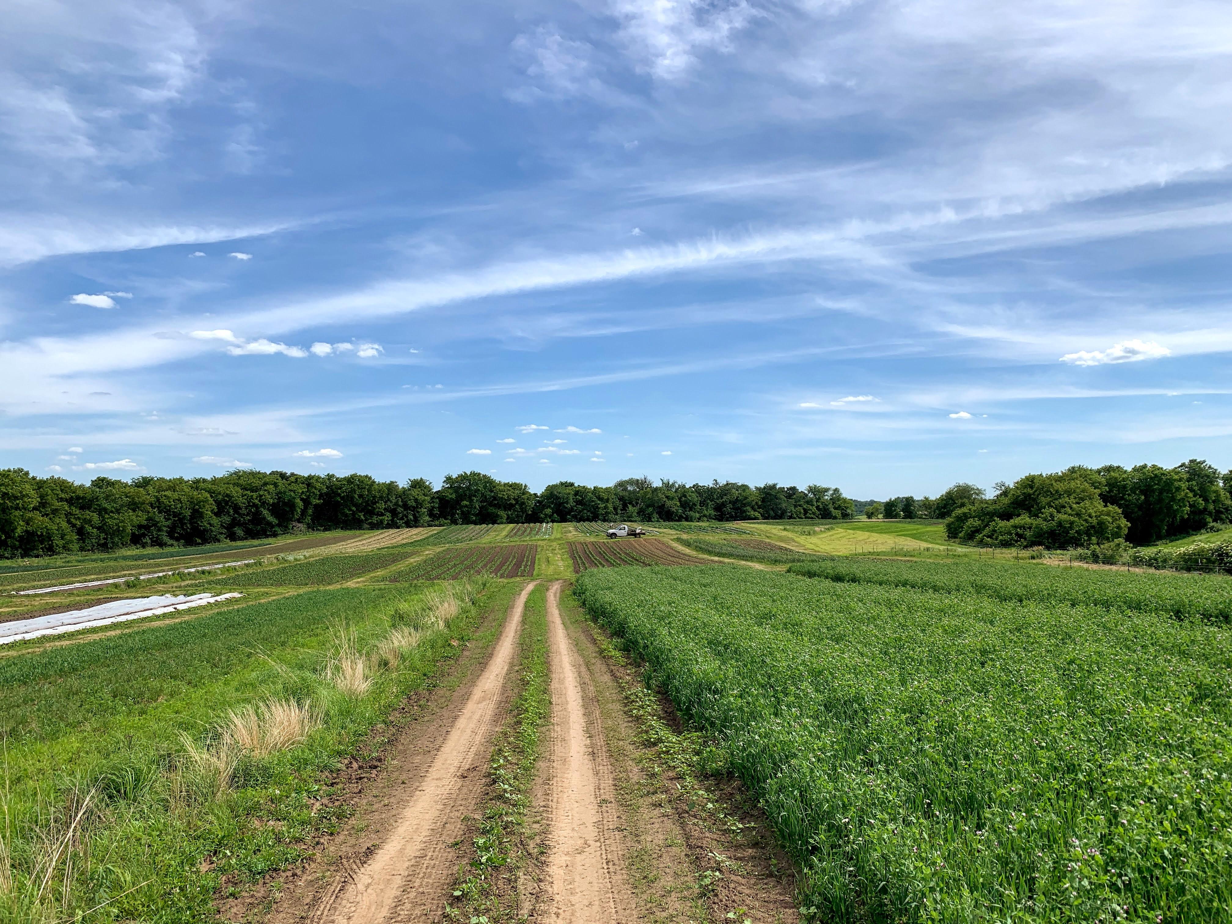Farm Share Week 4 Newsletter