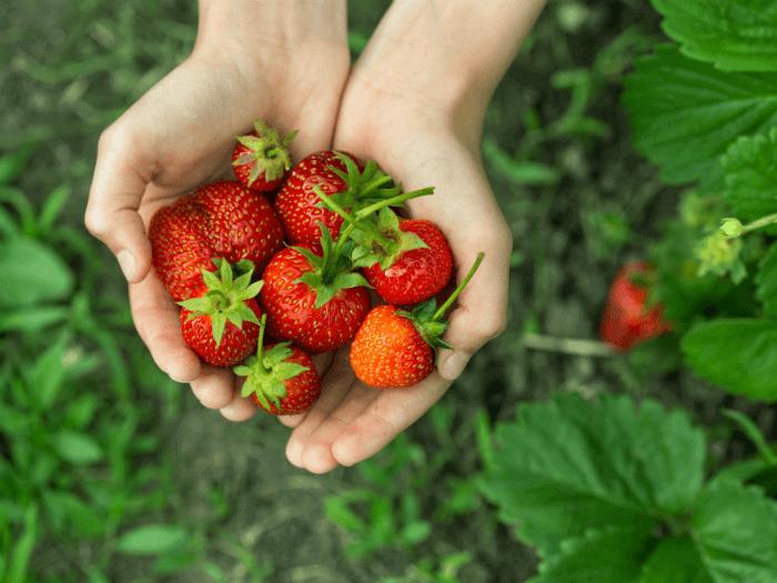 Farm Share - June 30
