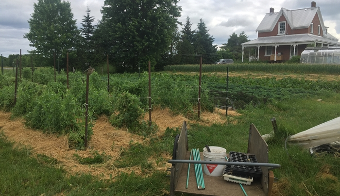 Farm Happenings for July 1, 2020