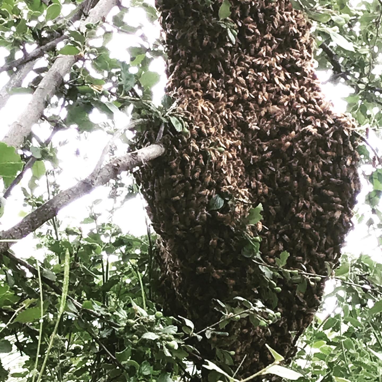 The Pollinators Love Us!