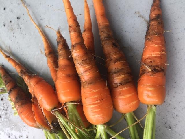 sad carrots :( but thats farming...