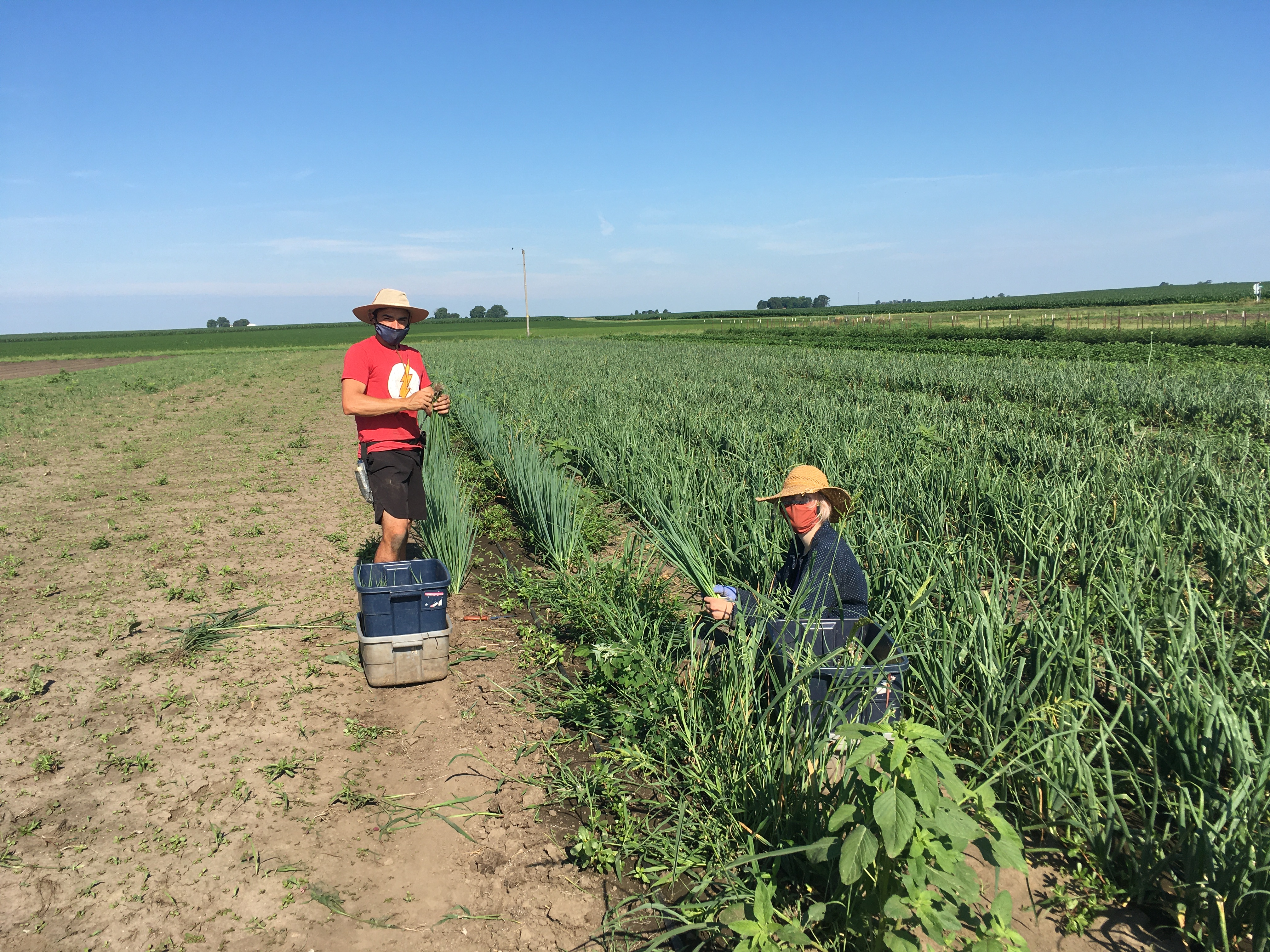 Farm Happenings for July 8, 2020: It's hot, have you noticed?