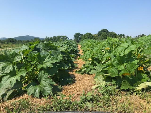Farm Happenings for July 7, 2020