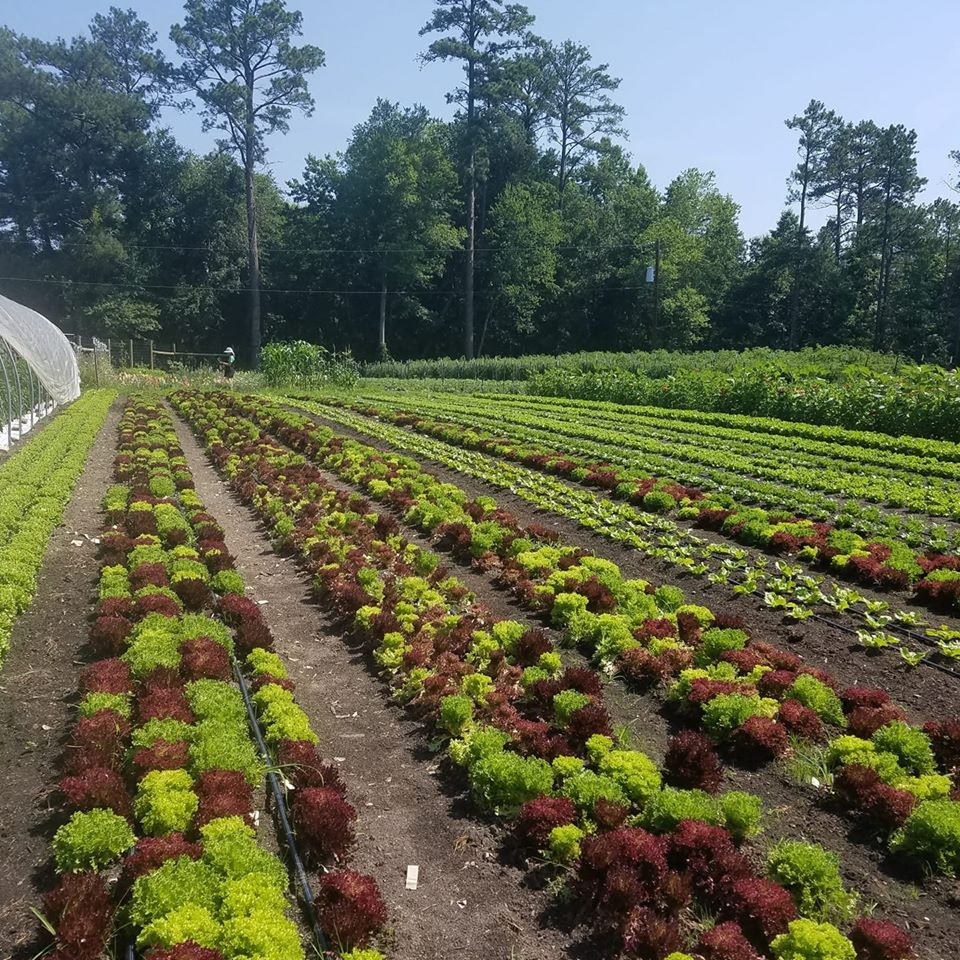 Farm Happenings for July 8, 2020