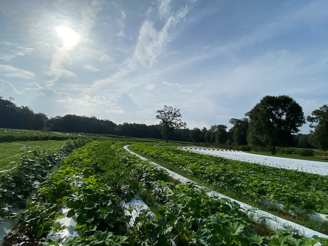 Farm Happenings for July 9, 2020