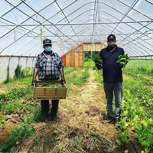 Farm Happenings for 7/14/2020: Collaborative farmer fundraiser for Somali Bantu Community Association land tenure