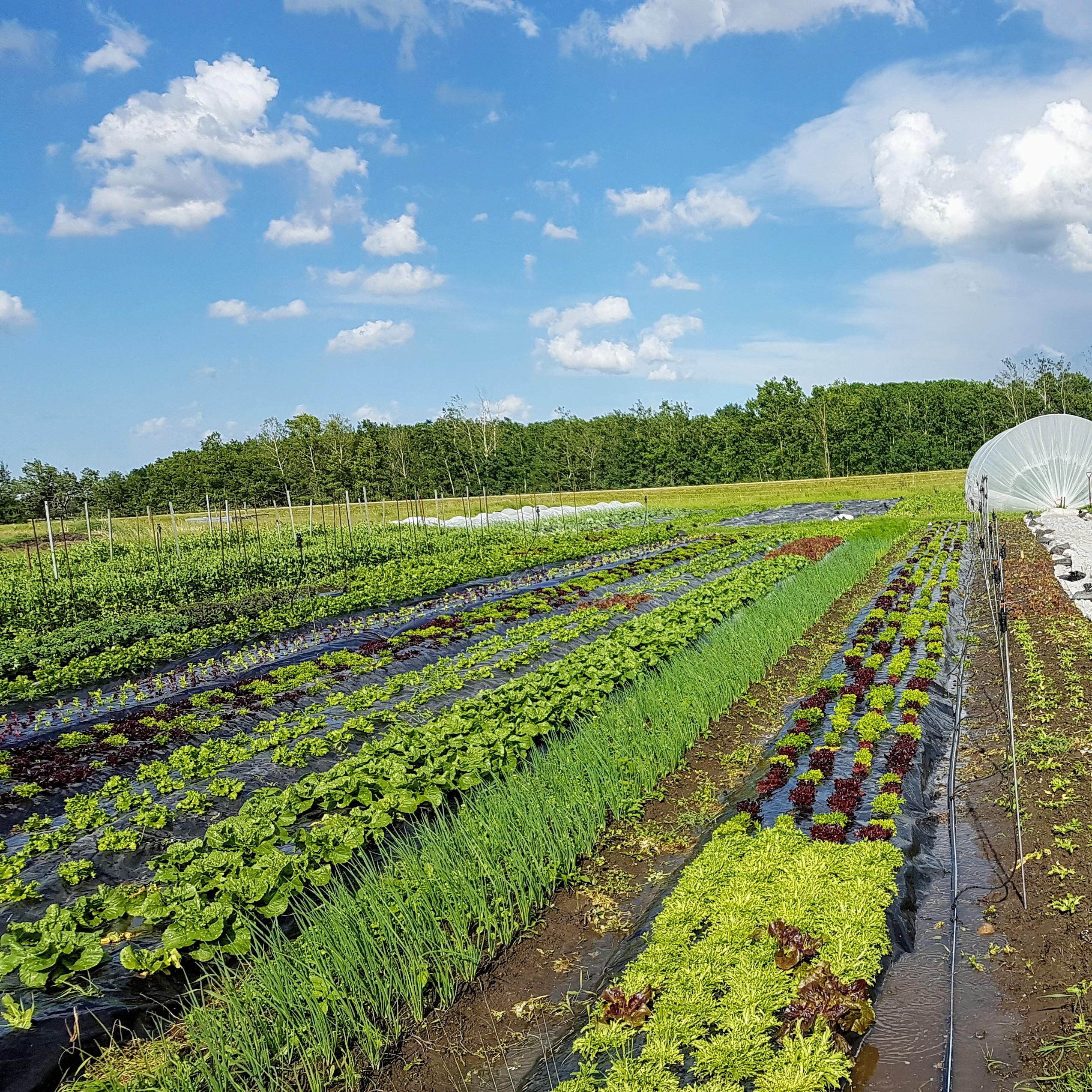 Farm Happenings for July 15, 2020