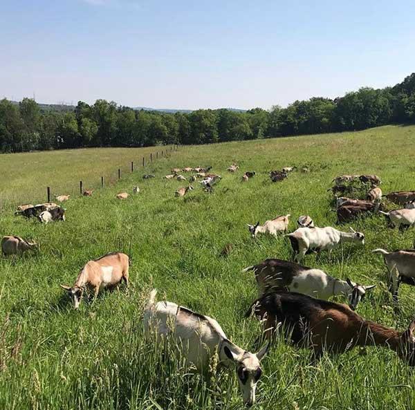 Farm Happenings for Week of July 21, 2020