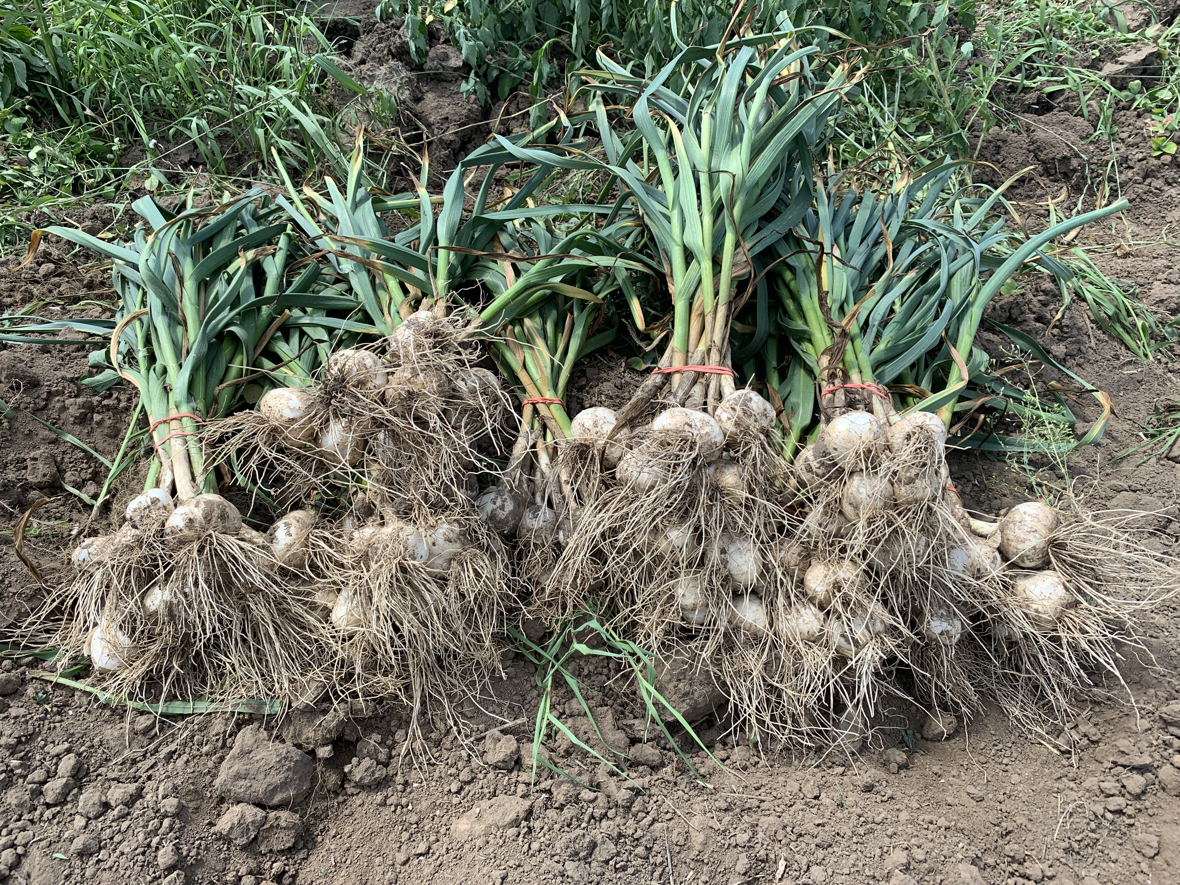 Farm Share Week 7 Newsletter