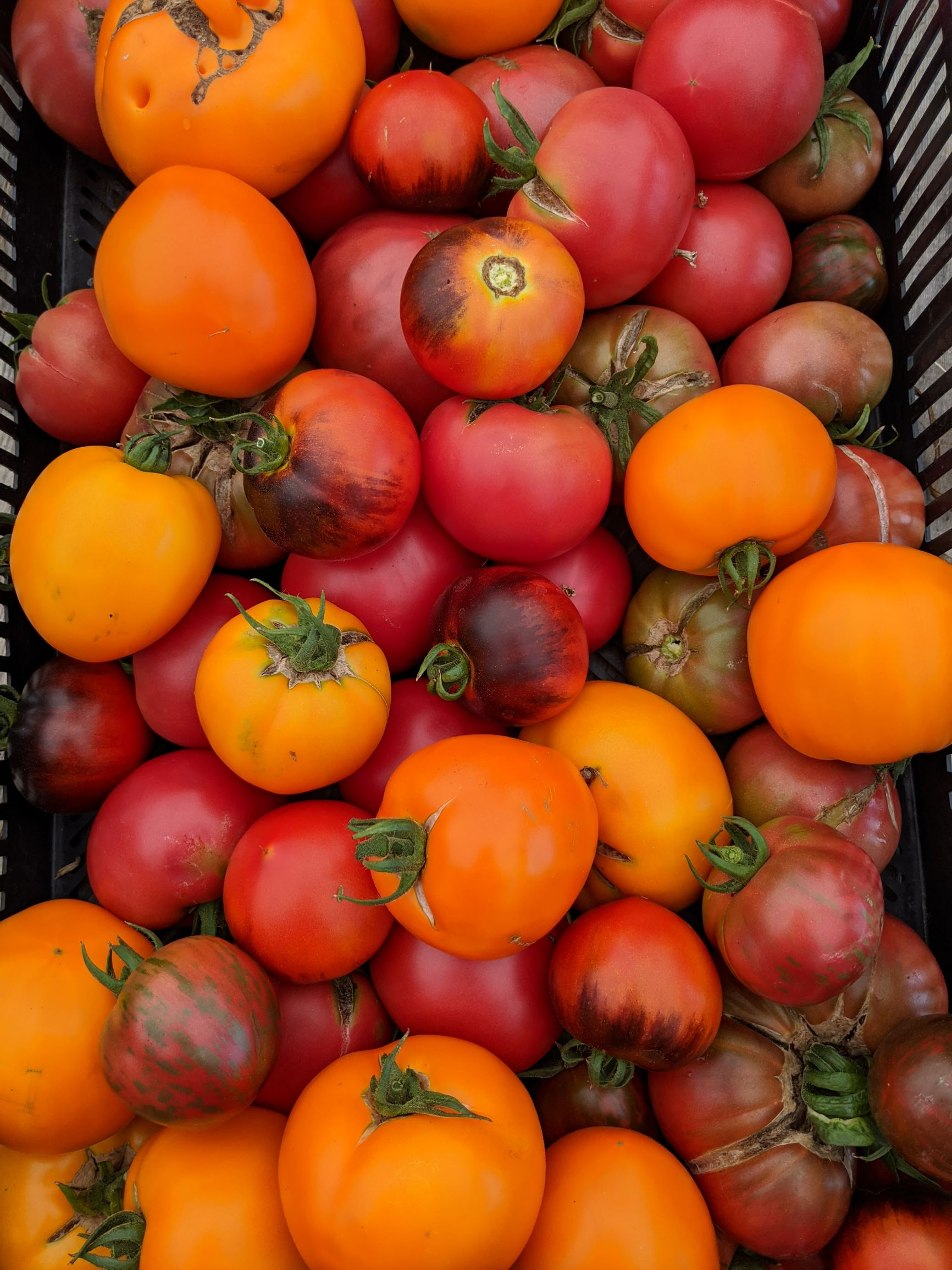 Farm Share Week 7 - Planting Time!
