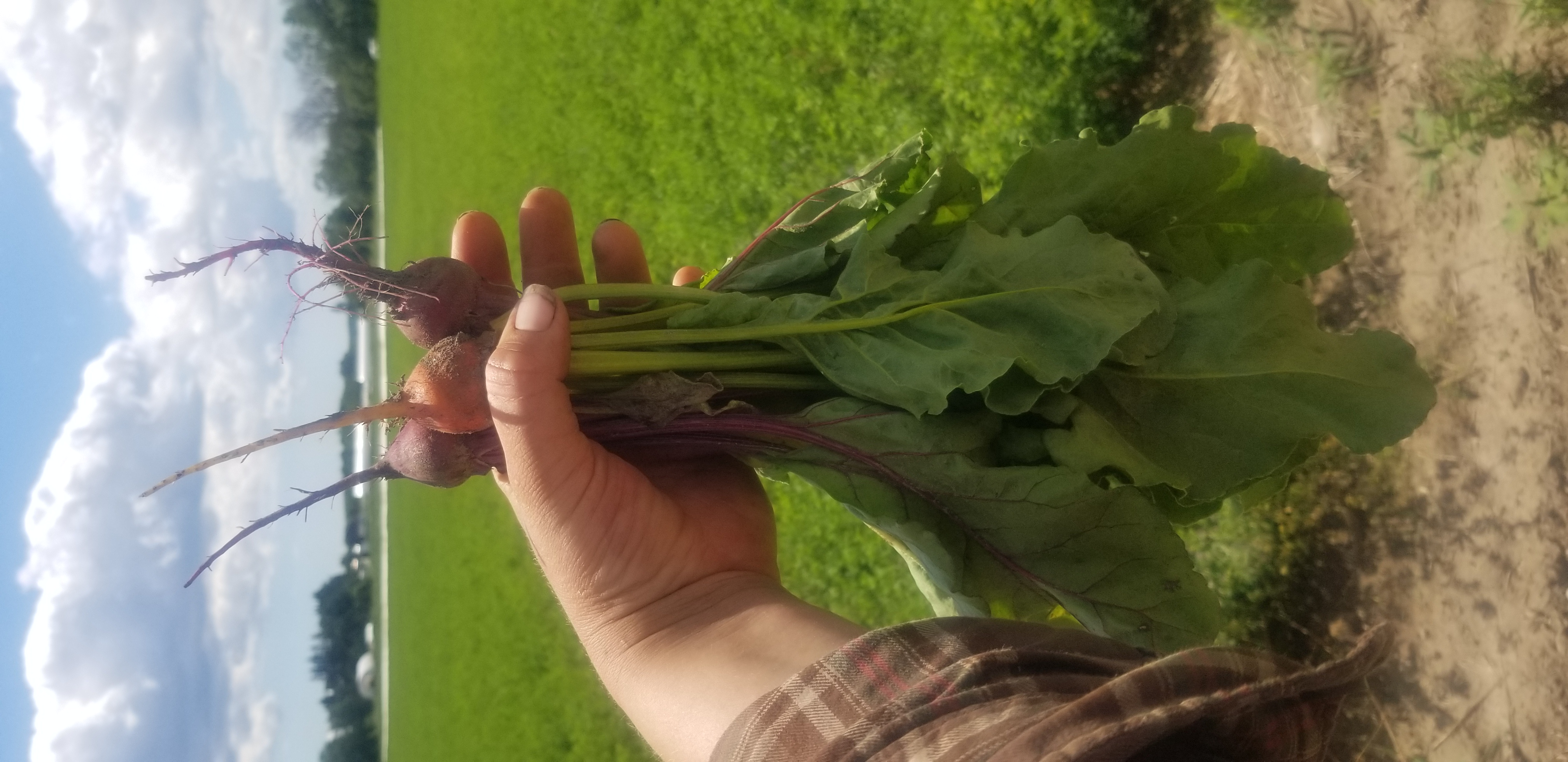 Farm Happenings for July 25, 2020