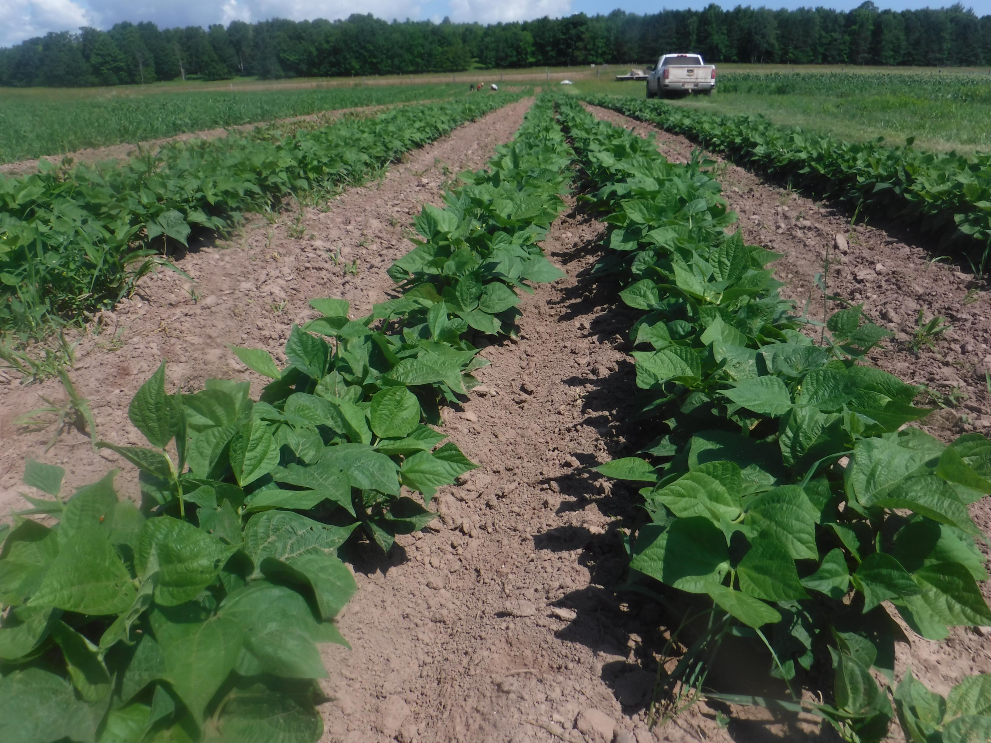 July 31 Farm Happenings