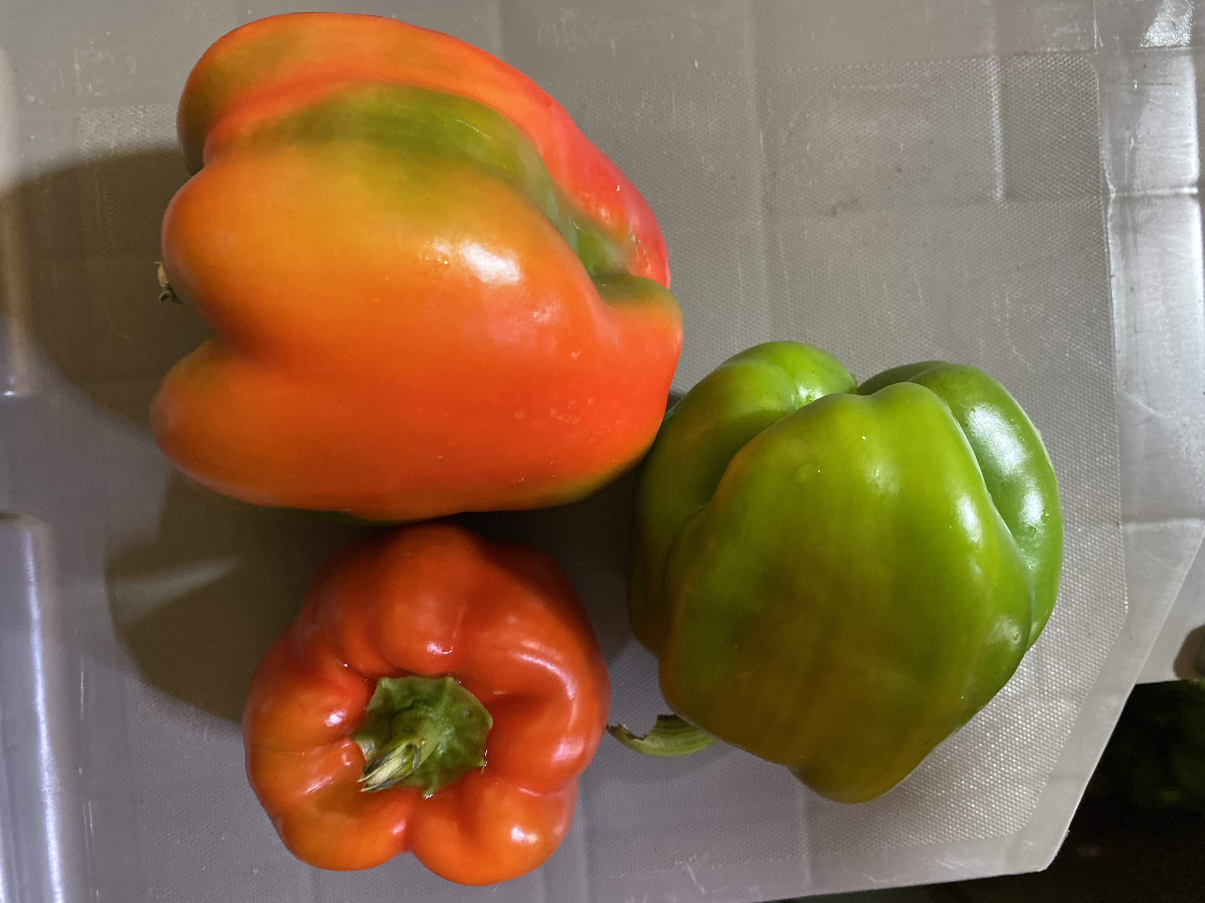 August Break and peppers!