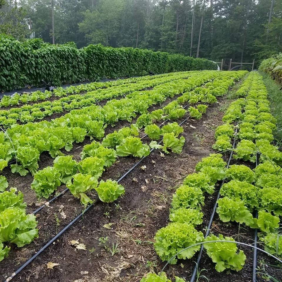Farm Happenings for August 12, 2020