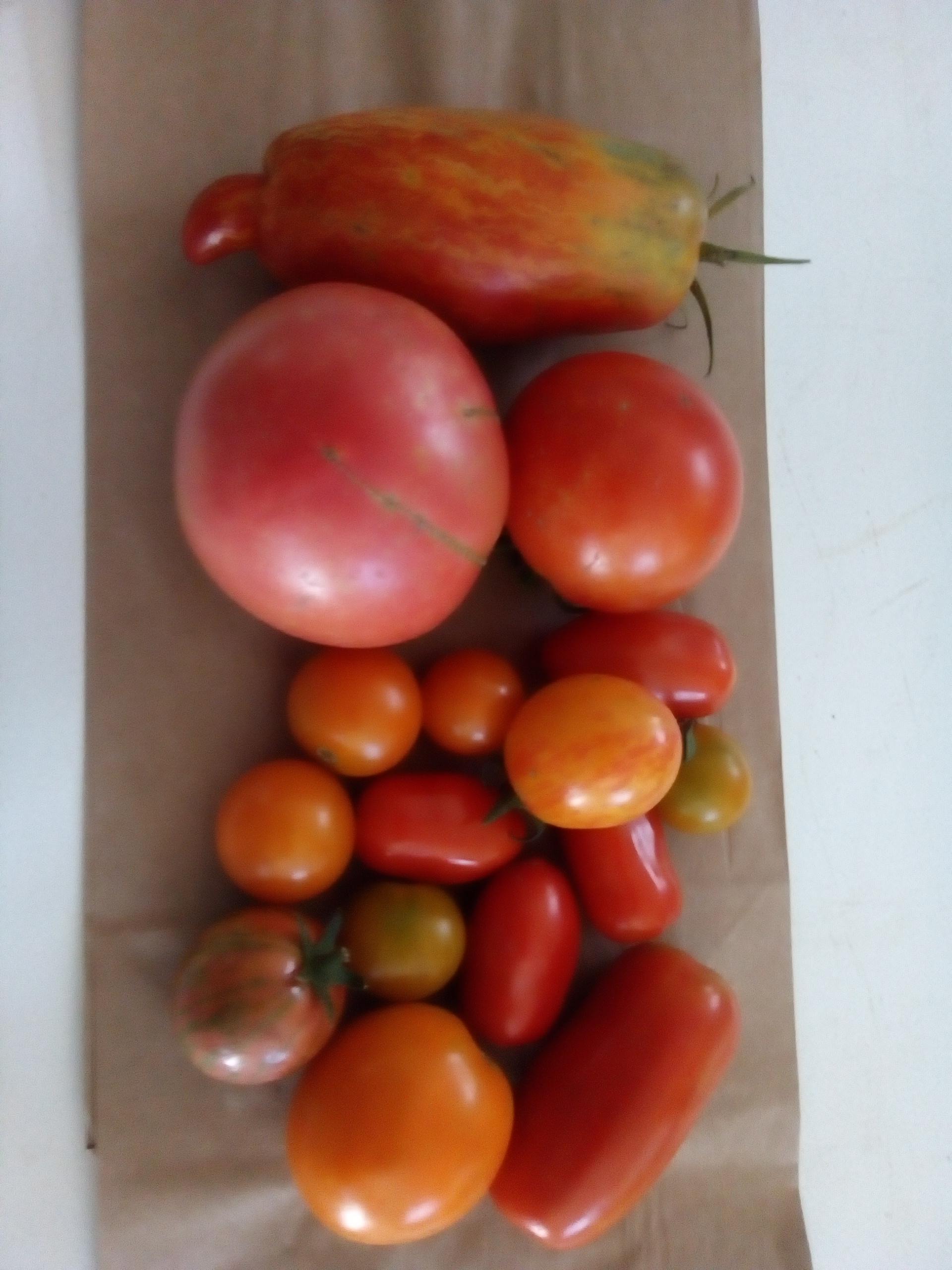 Week 9 -- Tomatoes