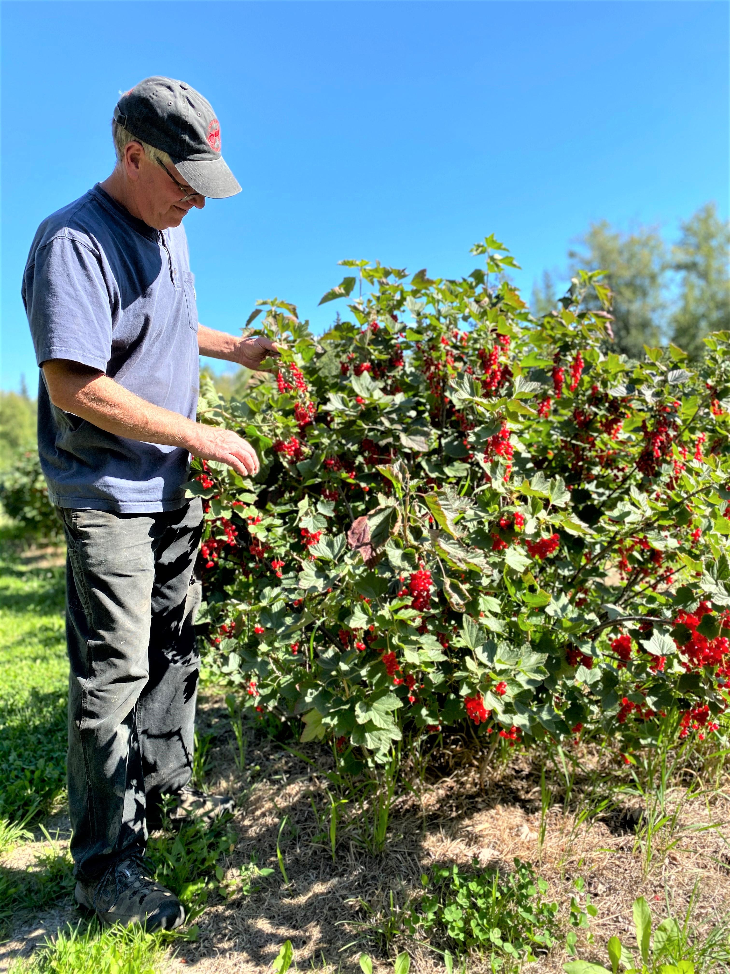 Fruit Farming with Juice, Jelly & Jam
