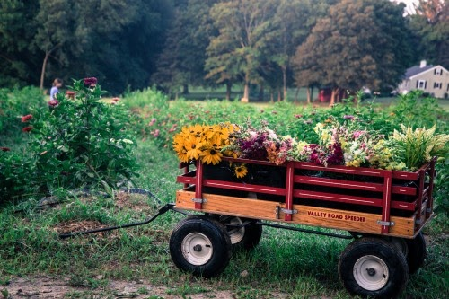 Oxen Hill Farm Summer 2020 CSA Season Week 12! (week of September 7)