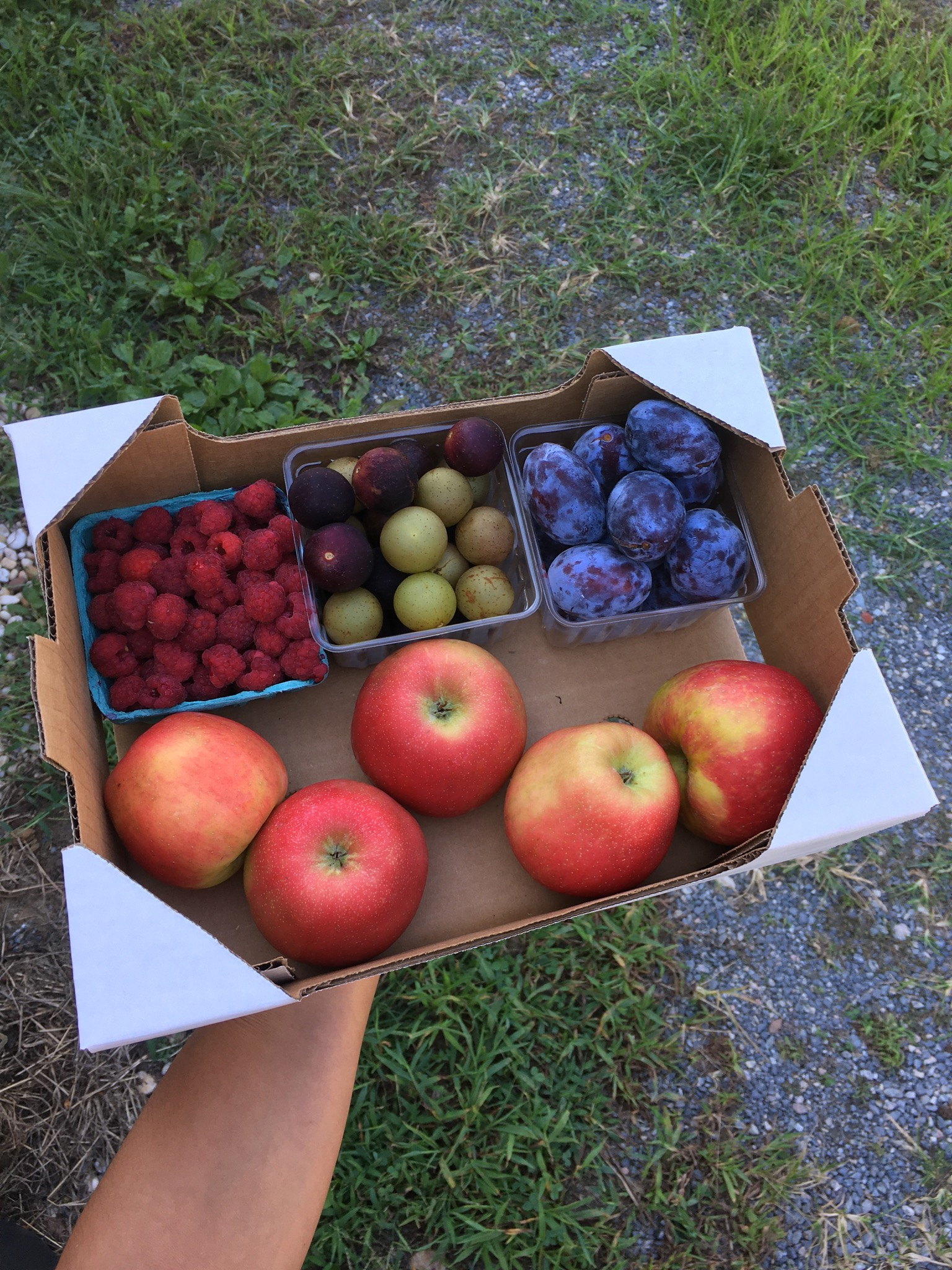 Final week of the Summer Farm Share. Next week begins the Fall Farm Share