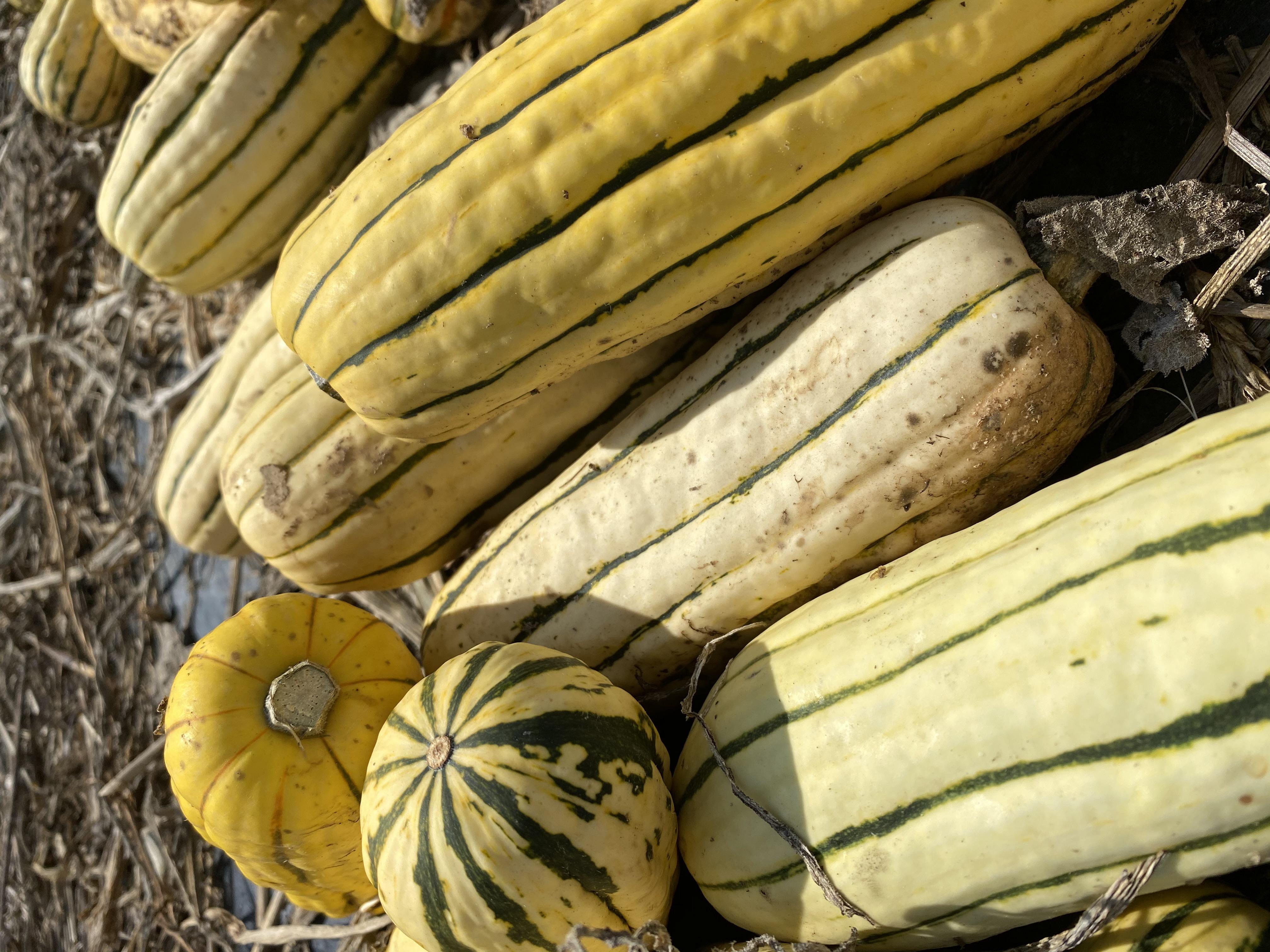 Farm Happenings for Week of September 14, 2020