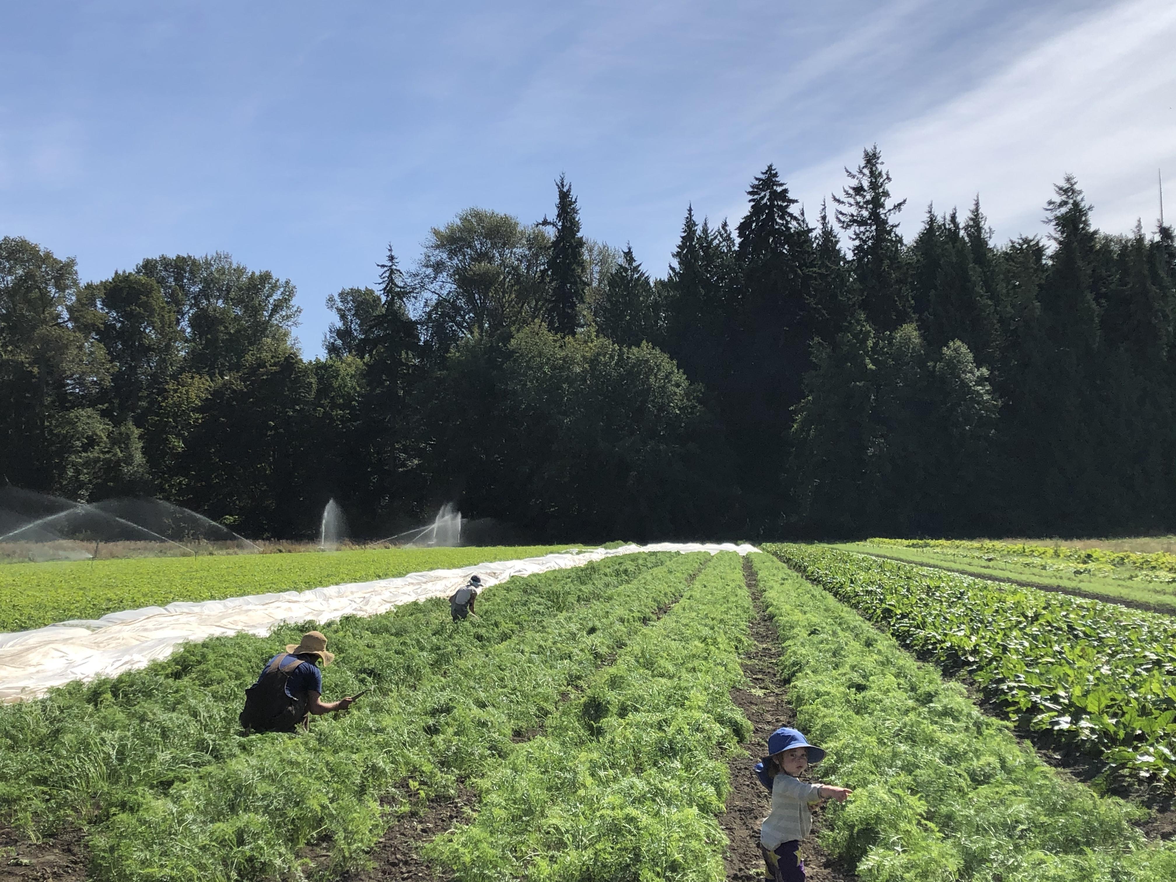 Farm Happenings for September 17, 2020