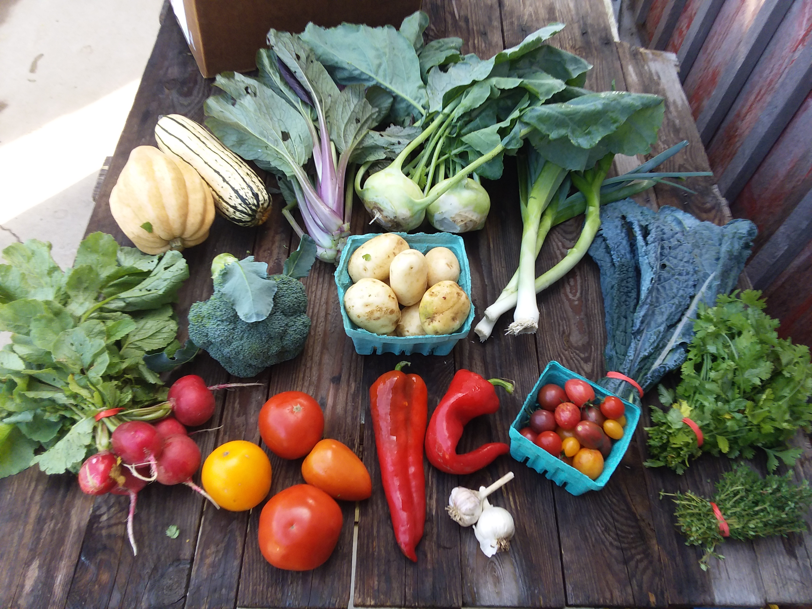 CSA Box 15 (Please Click on Continue Reading to see Whole Newsletter)