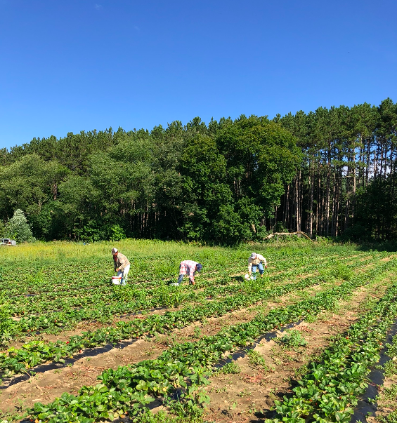 Week 17 of 20; Summer 2020 Vegetable Share-Coopers CSA Farm Happenings
