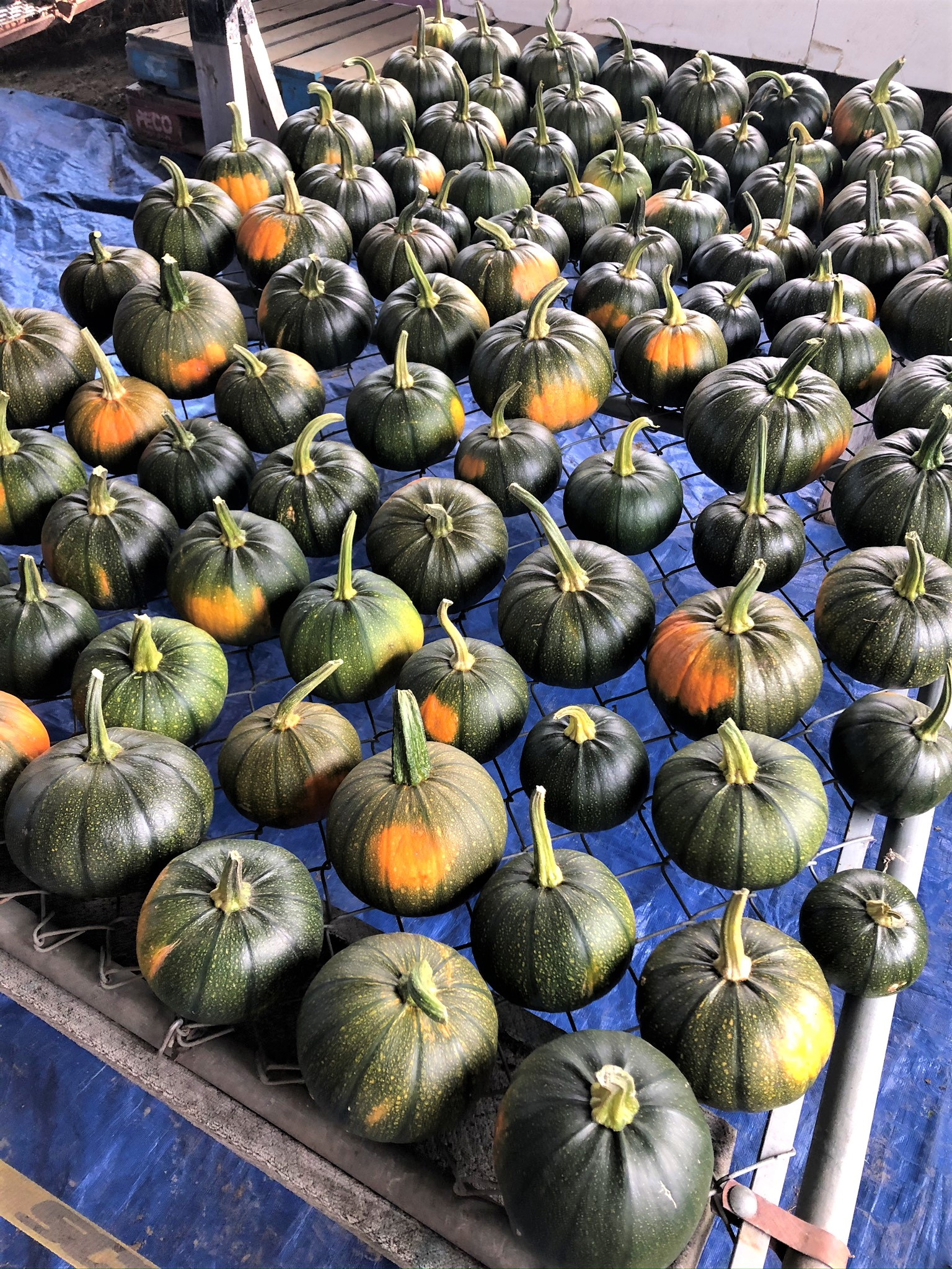 Pumpkin & Winter Squash Season Is Here!
