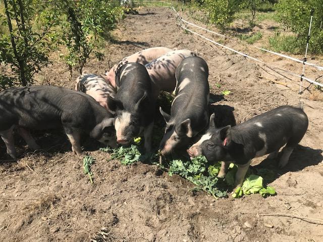 Week 17 and Pork Sale