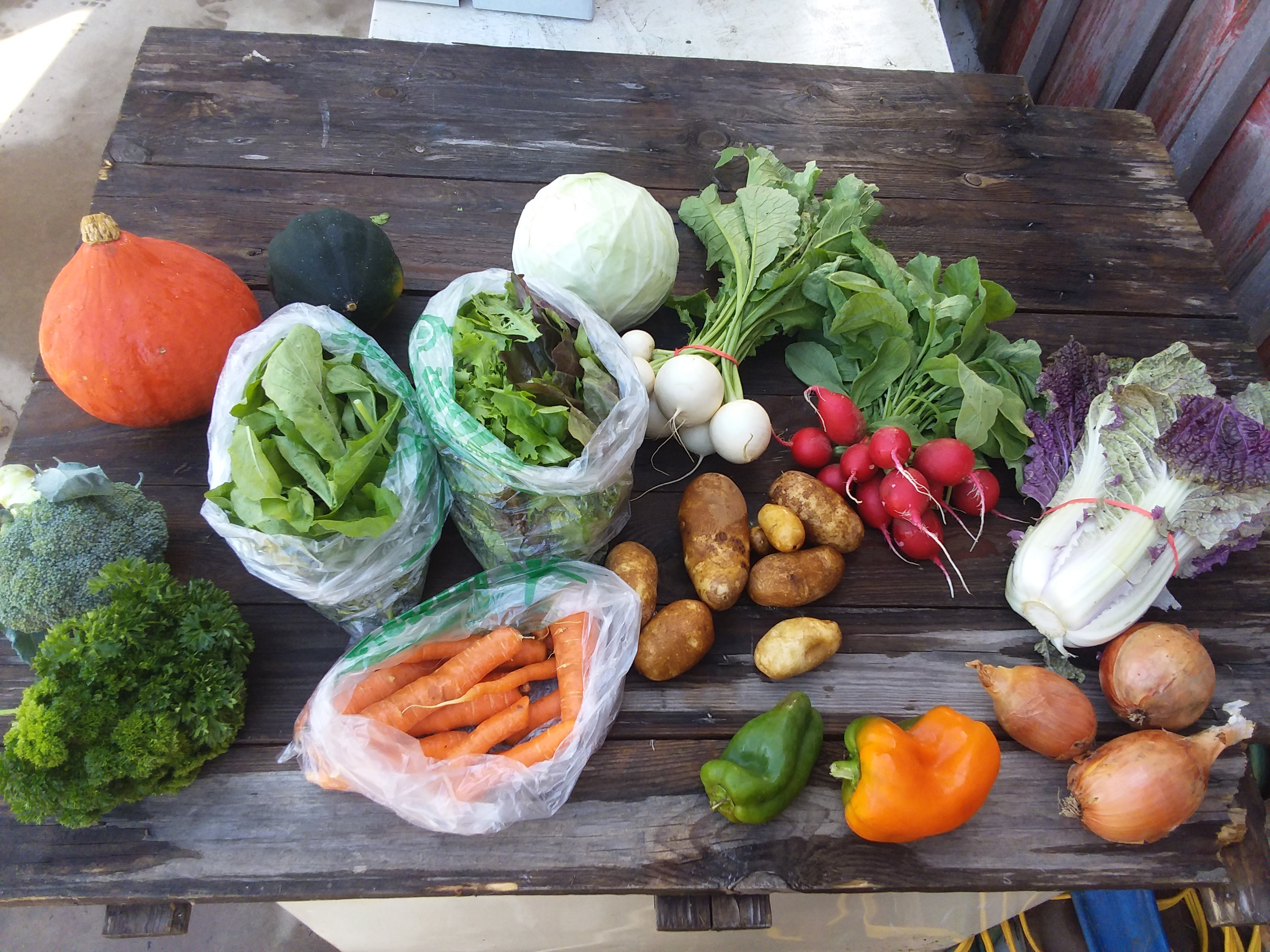 Fall CSA Box #1! (please click on Continue Reading to see whole newsletter)