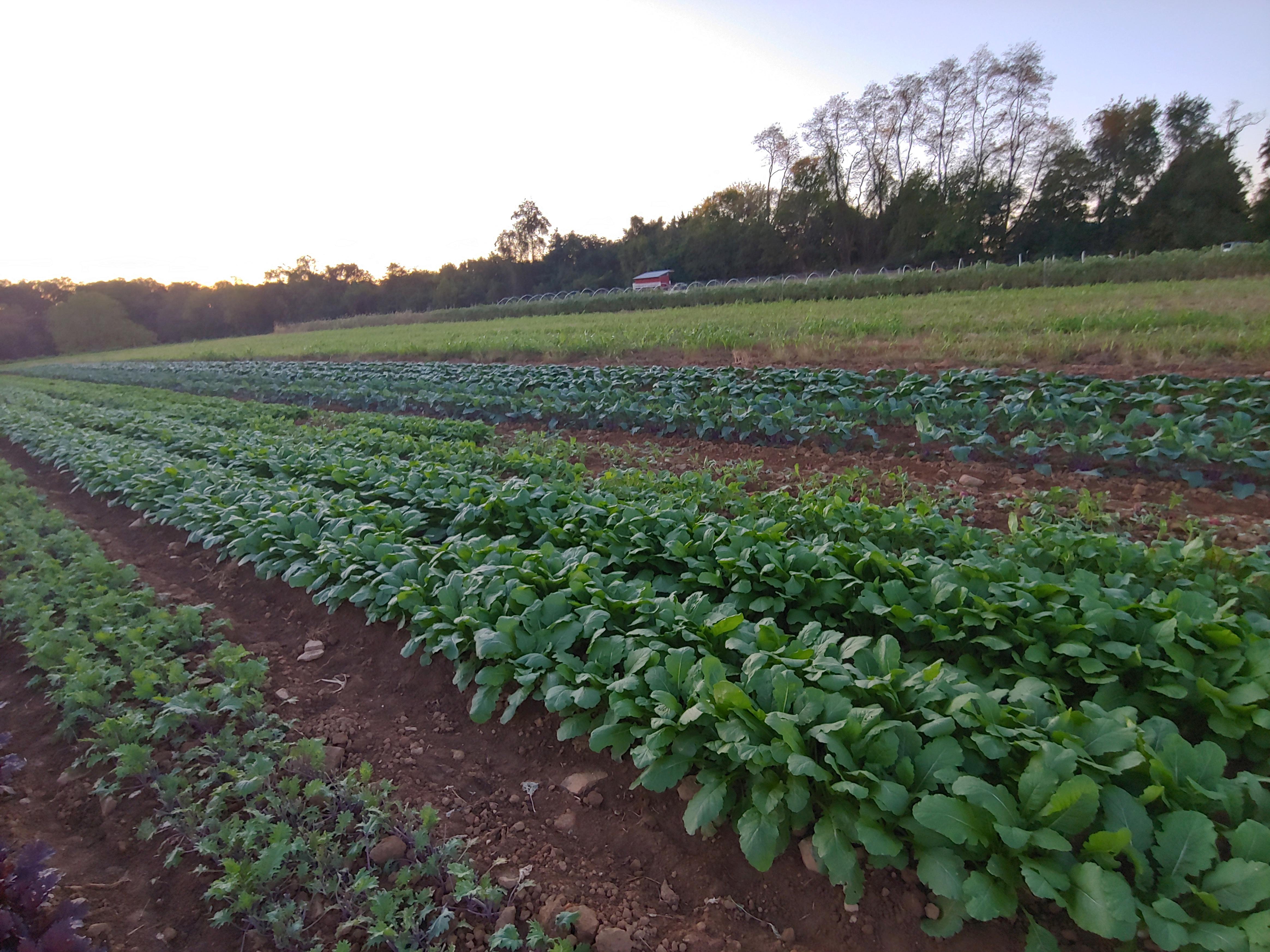 Farm Happenings for Week of  October 19, 2020