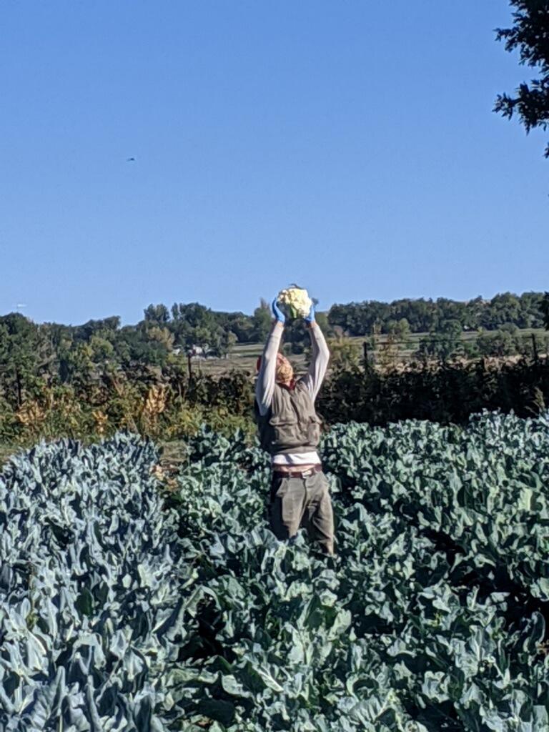 Farm Happenings Week 22, 2020