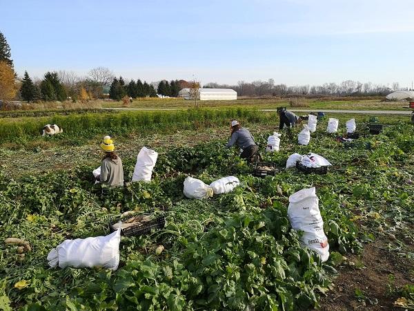 Farm Happenings for November 12, 2020
