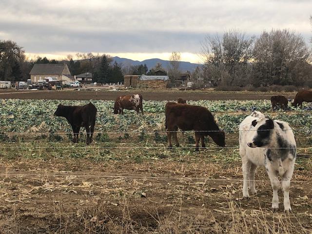 Farm Happenings Week 5 Fall CSA 2020