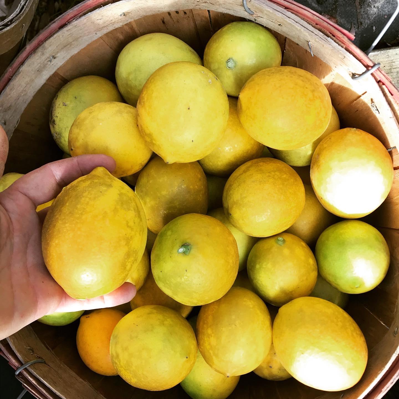 Myer Lemon season