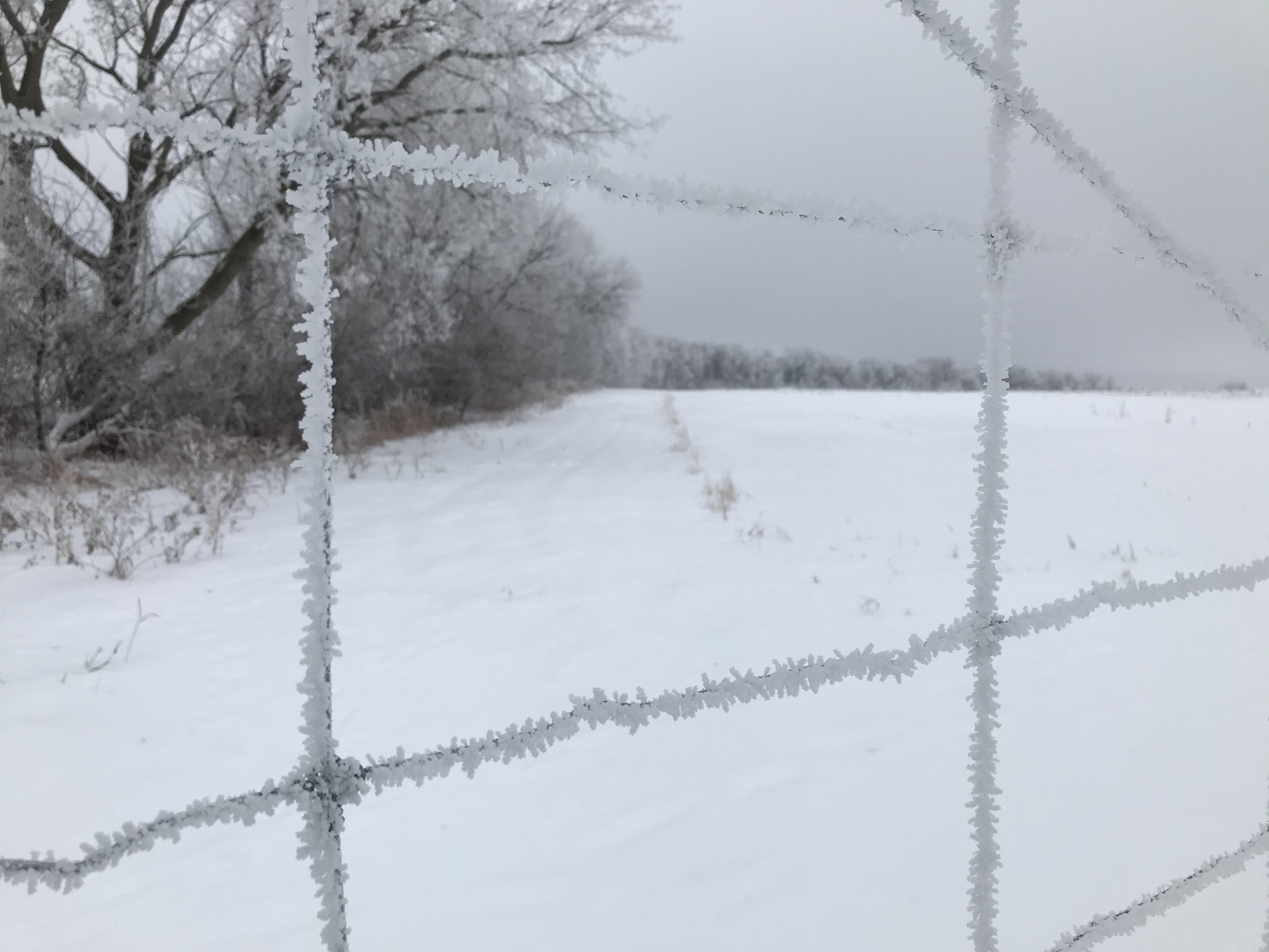 Winter Farm Share Newsletter- Week 6