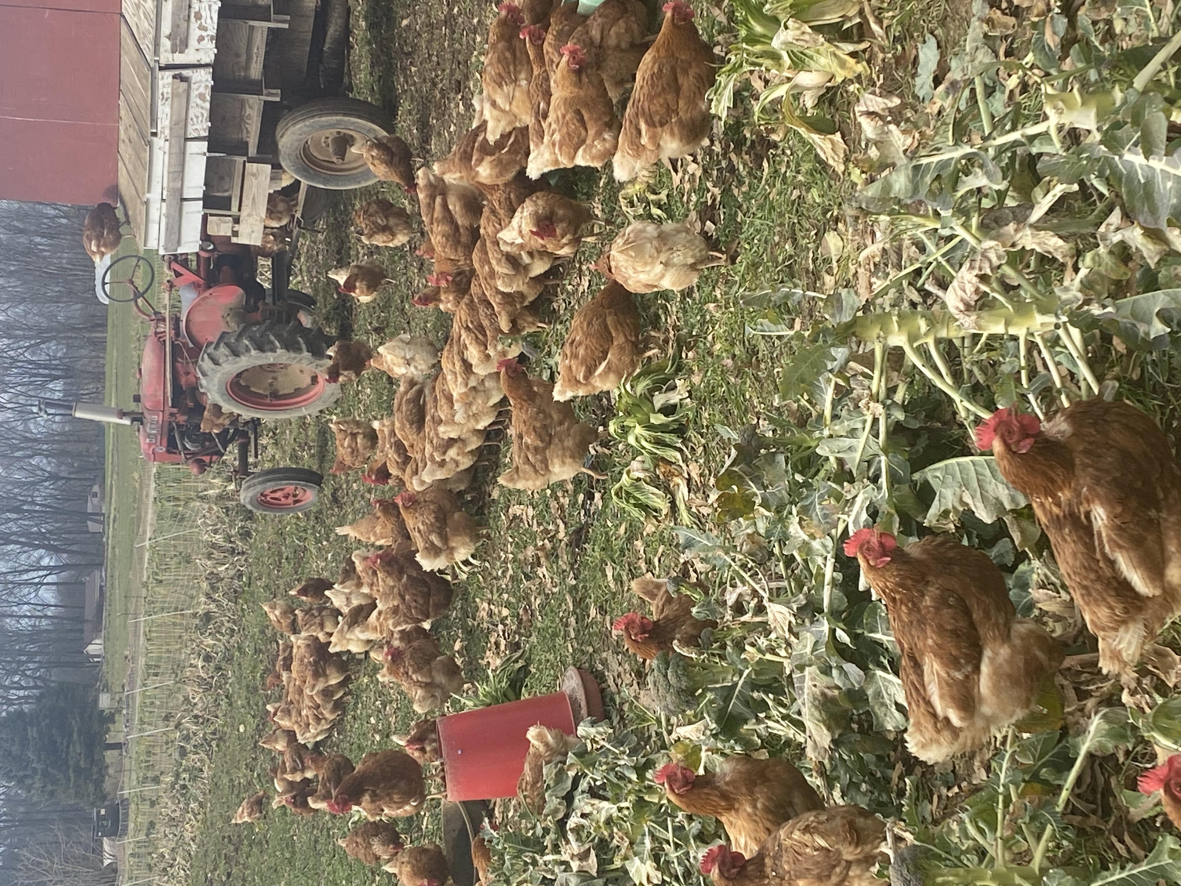Farm Happenings for Week of January 25, 2021