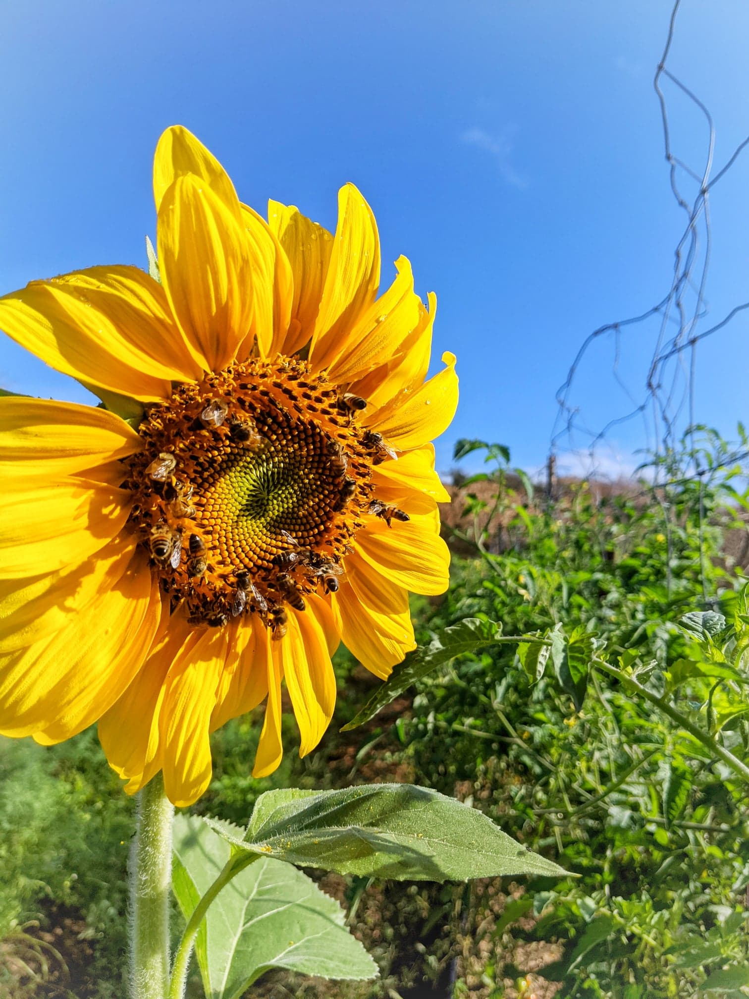 Happy bees means happy farm