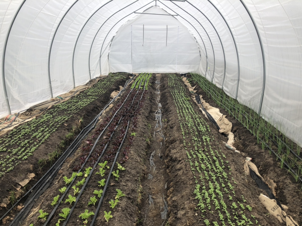 Farm Happenings for April 15, 2021