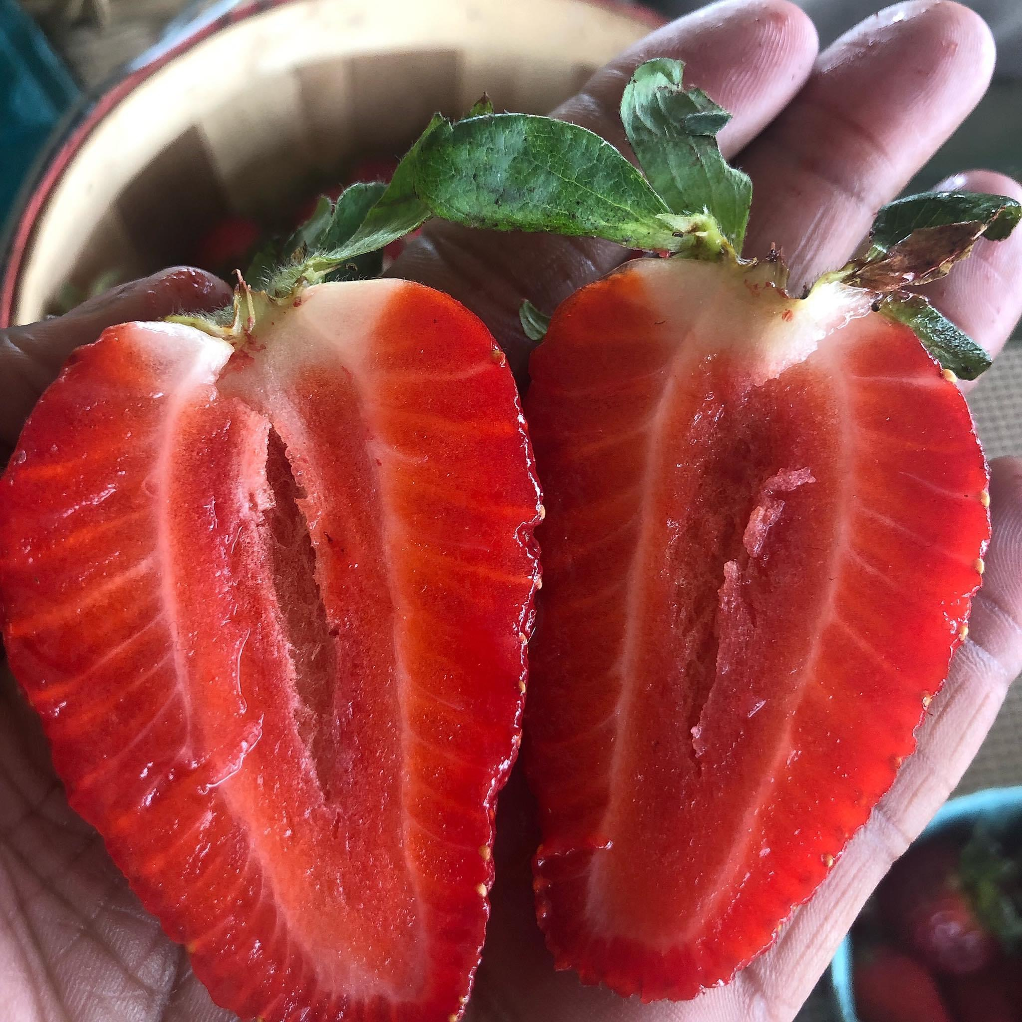 Georgia-Grown Strawberries are Here!