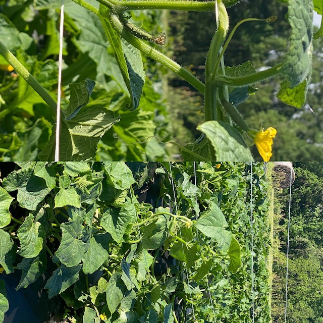 Farm Happenings for May 1, 2021