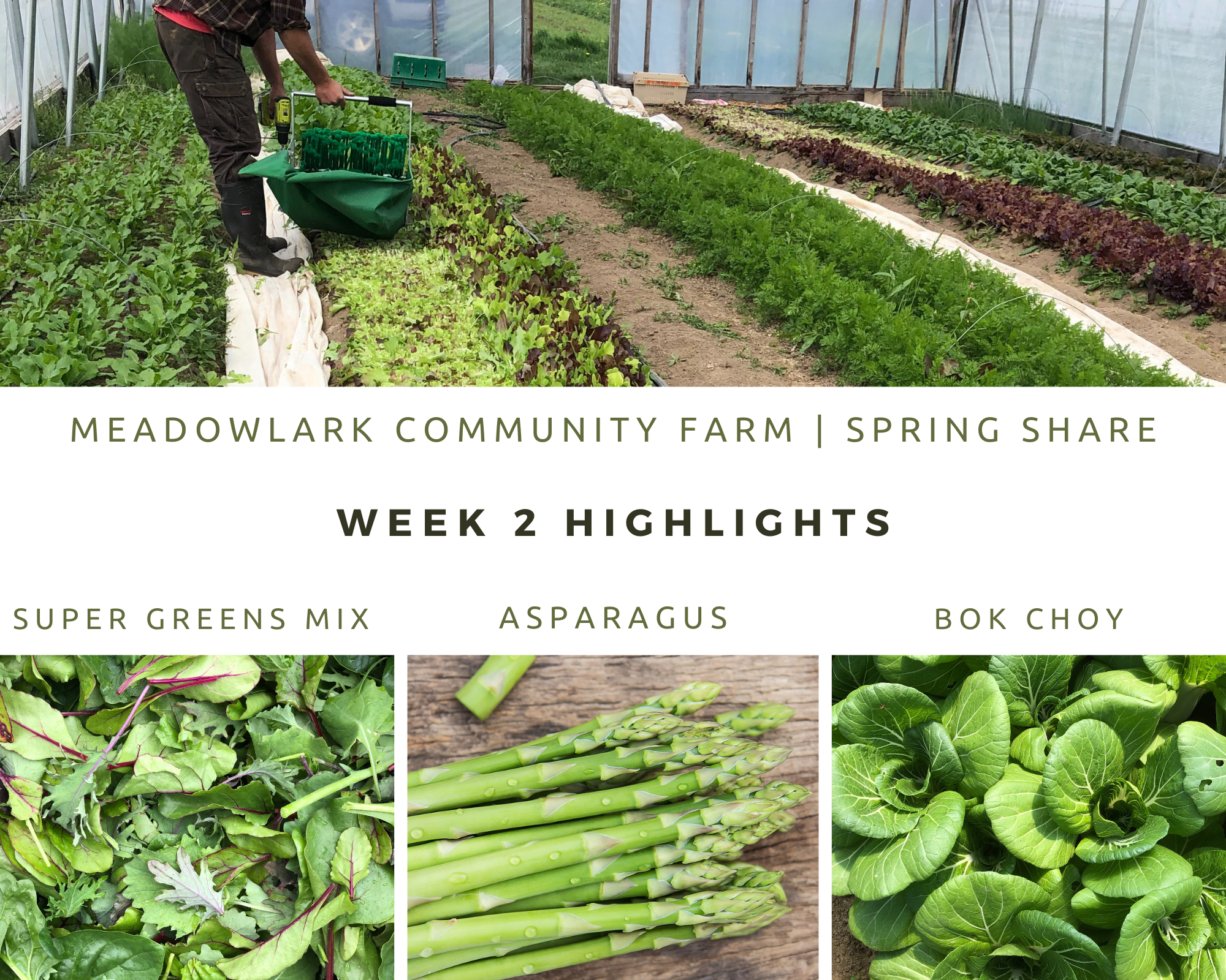 Spring Share: Week 2