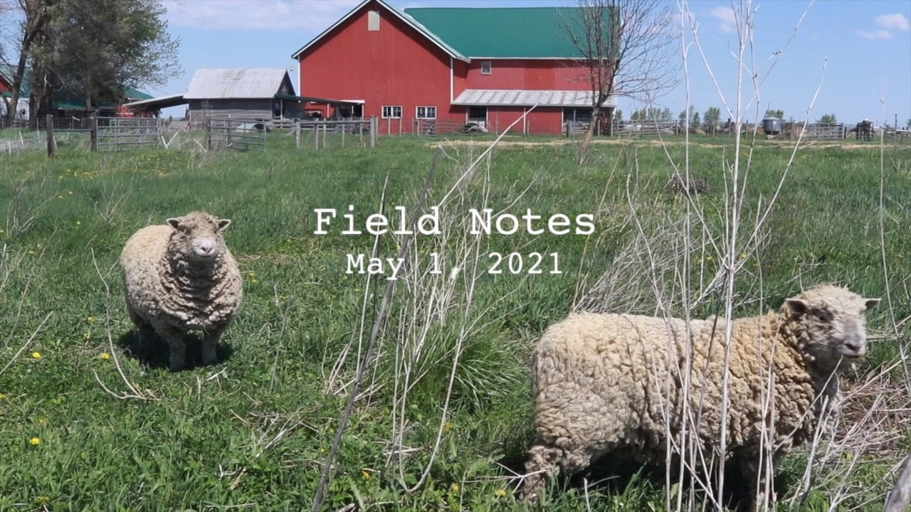 Field Notes: Checking in on Crops for June CSA Boxes