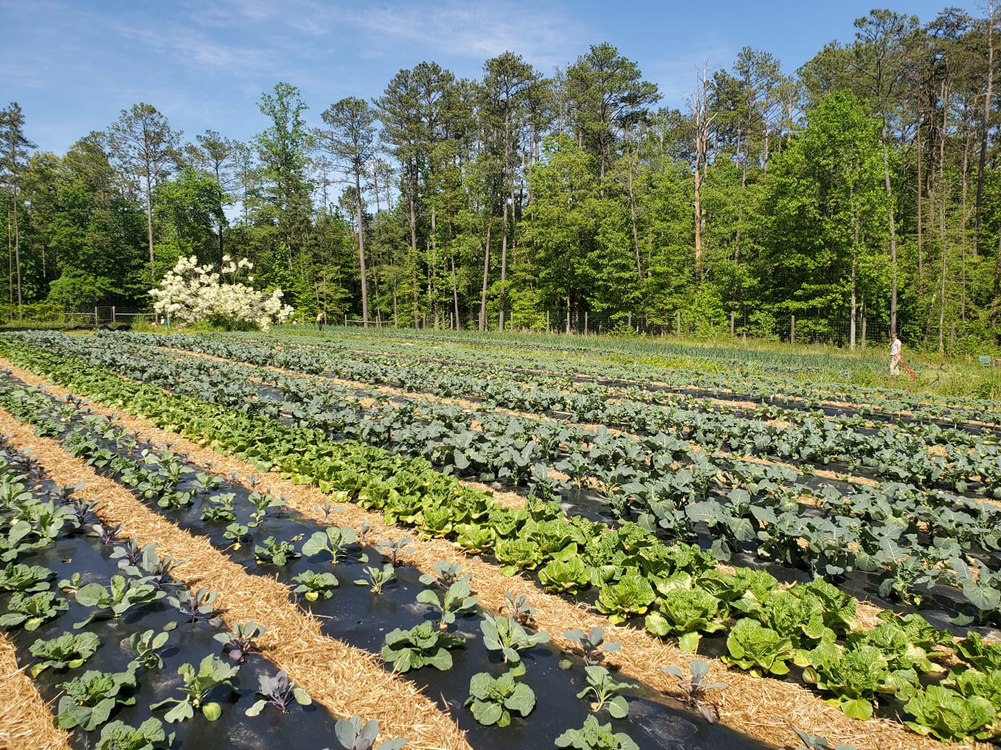 Farm Happenings for May 12, 2021