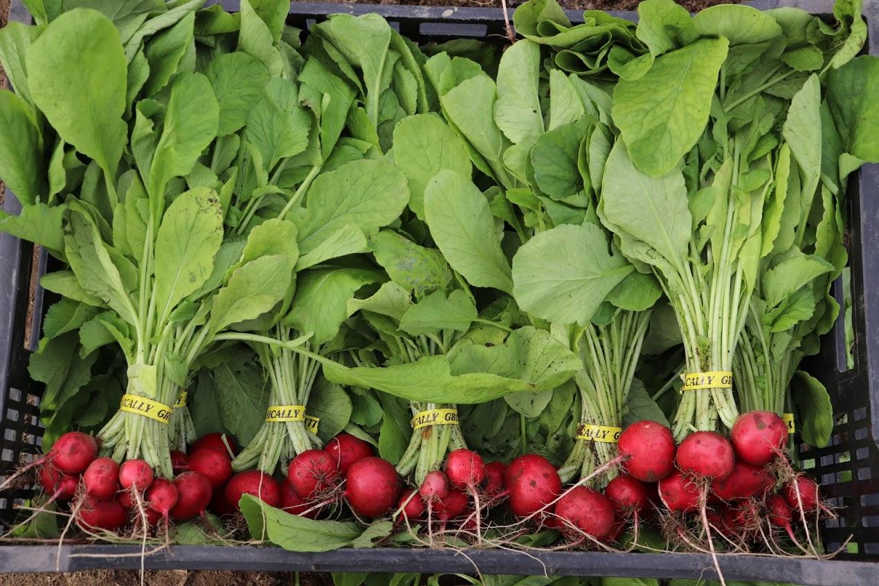 Growing Food is Rad!