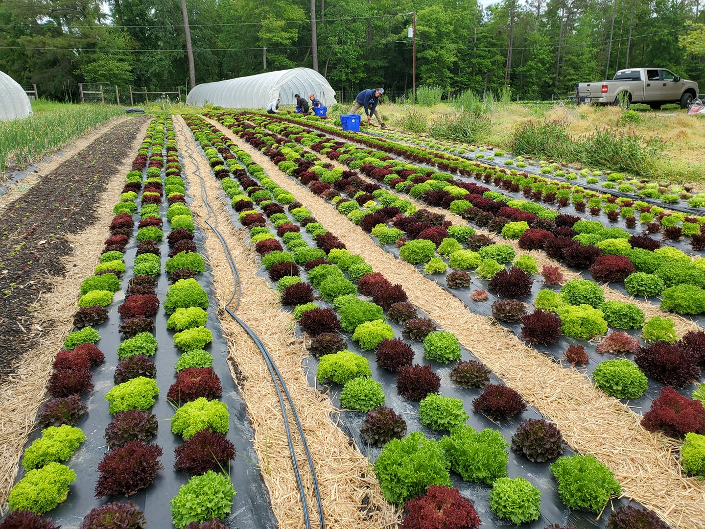 Farm Happenings for May 15, 2021