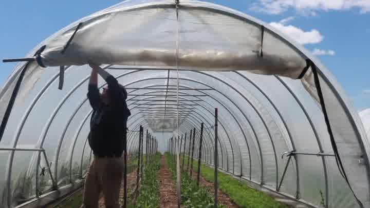 Field Notes: Planting, Watering, Harvesting...Sheep Shearing!