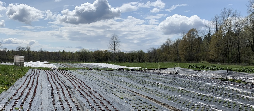 Farm Happenings for May 19+20, 2021