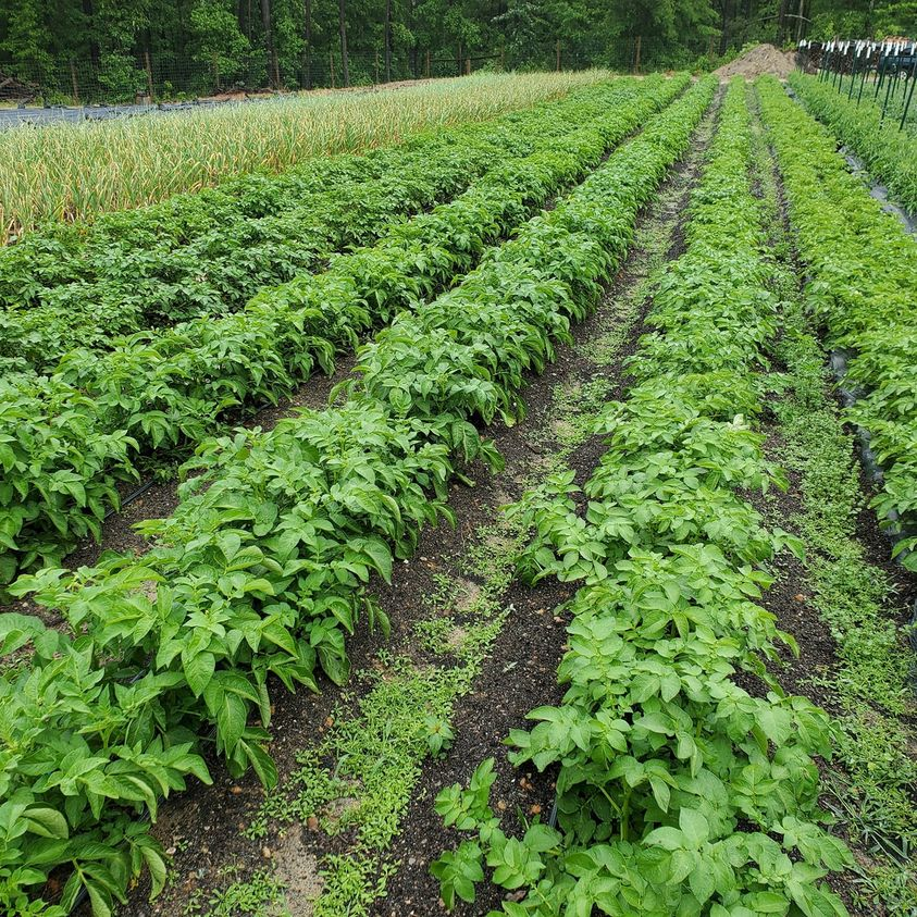 Farm Happenings for June 5, 2021